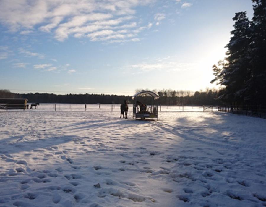 WinterblickHengstkoppel